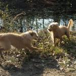 犬の多頭飼い ケンカの原因と対策