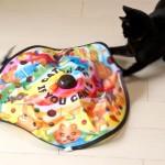 喜ぶおもちゃをしって、飼い猫を満足させちゃおう!