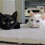 毛色によって猫の性格に違いはあるの?