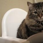 どんな洗剤を使えばいいの? 猫のトイレ掃除の方法や頻度について