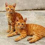 多頭飼い初心者さん向け 猫の餌やりガイド