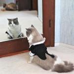 猫には短いしっぽのがいるのはどうして?