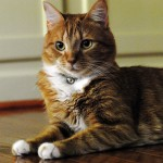 目を細めるときの猫の気持ちはどんな感じ?