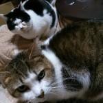 快適な寒さ対策をして飼い猫の健康を守ろう