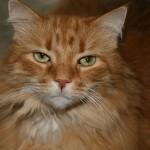 猫のひげから気持ちを読み取る事は可能?