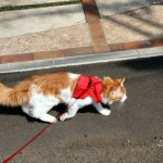 散歩をさせたい!飼い猫のリード選びのポイント