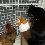 猫が網戸を破って脱走するときの方法と対策