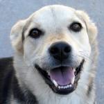飼い犬の歯石除去の費用ってどのくらい?