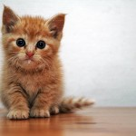 生後3週間 好奇心が旺盛な時期の子猫の育て方