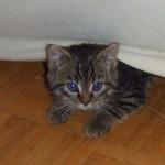 生後2週間 まだまだ赤ちゃん子猫の育て方