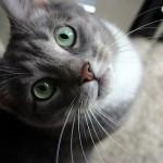 夜になると鳴く飼い猫への対処法
