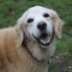犬の噛み癖の直し方を知って、うちの子もいい子にしよう!