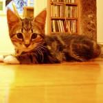 新入り子猫を威嚇する先住猫の気持ちとは