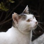 耳がカットされた猫ってなにを表しているの?