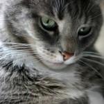 飼い猫の鼻に黒い点ができたけど、これって何!?