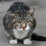 飼い猫を守ろう! 怖い熱中症の症状ガイド