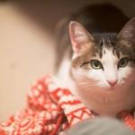 飼い猫の体温が低い? 体調不良の兆候アリ!