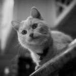 魚の骨ごと食べるけど、猫は喉に刺さったりしないの!?