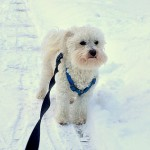 愛犬が冬場の散歩を嫌がる! そんなときのワンポイント対策