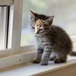 首の後ろを掴むと猫が大人しくなる理由とは