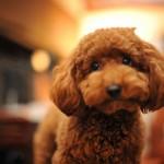 犬は種類によって性格に違いが出るの!? 人気の犬種まとめ