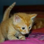 子猫の体重を増やす方法 食が細い子のための食事管理法