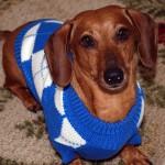 犬も服を着るべき!? 冬場の寒さ対策ガイド