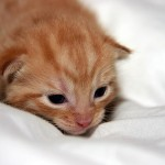 うちの子猫 体重が増えないのはどうして? 原因と対策