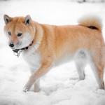 冬場の犬の散歩で気を付ける事は?時間も見直すべき?