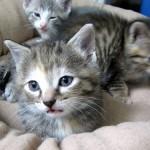 猫同士 首の後ろをガブリと噛むのは危険!?