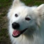 犬が鼻を鳴らす理由を知って、コミュニケーションを取ろう!