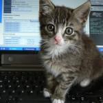 飼い主のことを猫はどれくらいで忘れる!?