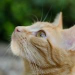 猫が顔を洗うと雨が降るってホント? 仕草に隠された意味を知ろう!