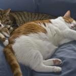 飼い猫の体温の測り方を知って、健康管理に役立てよう!