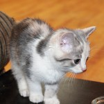 性格が変わるって本当? 猫の避妊・去勢手術後の変化とは?