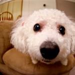 犬の鼻が乾燥してカサカサ!これって病気?