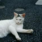 気になる飼い猫の肉球の腫れ 治療法はある!?