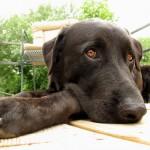 飼い犬が夏バテになったかも? 症状を見極めるには