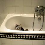 猫の嫌がるシャンプーの際のシャワー お湯の温度や注意点まとめ