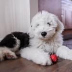 犬の寿命は平均どのくらい? 犬種によって異なる?