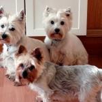 犬の多頭飼いは相性が大切!どんな事に気を付ければいいの?
