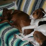 犬と一緒に引っ越し! 少しでもストレスを軽減してあげる方法