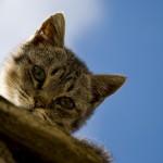 高い屋根から降りられない猫 続出!? 実はこんな理由があった!