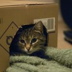 猫はどうして箱が大好き? 入っているときのにゃんこの気持ち