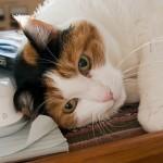 服についてしまった猫の毛対策 綺麗に取るためにはどうする!?