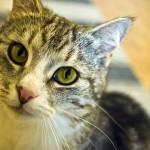 運動後に息切れをしてしまう猫 何か病気が潜んでいる!?