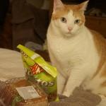 猫のおやつ 与えても大丈夫な適正量はどれくらい?