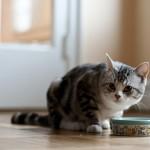 おやつは猫にとって必要? あげるタイミングやおやつの選び方
