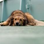 愛犬の鼻から黄色い鼻水が!どのような病気が考えられる?