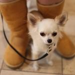 愛犬が家でおしっこをしない!原因と対策ガイド